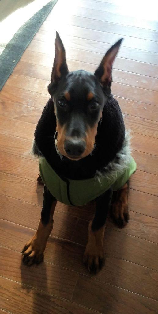 reomoe-new-coat