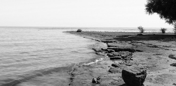 segals and rocks b and w