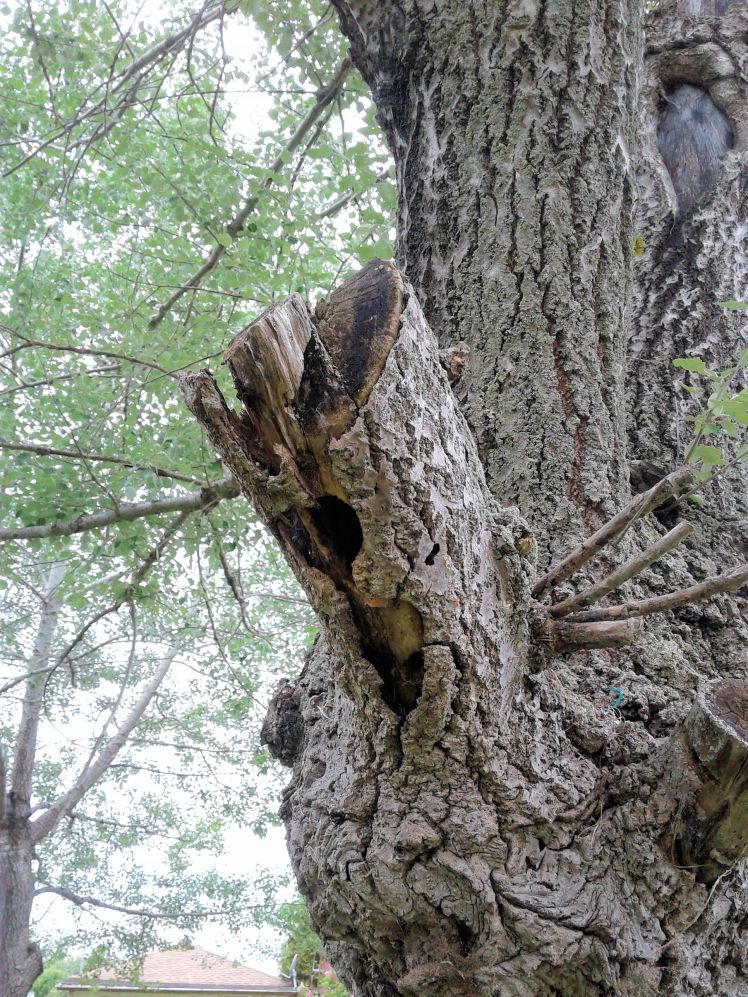 pruple martin nest