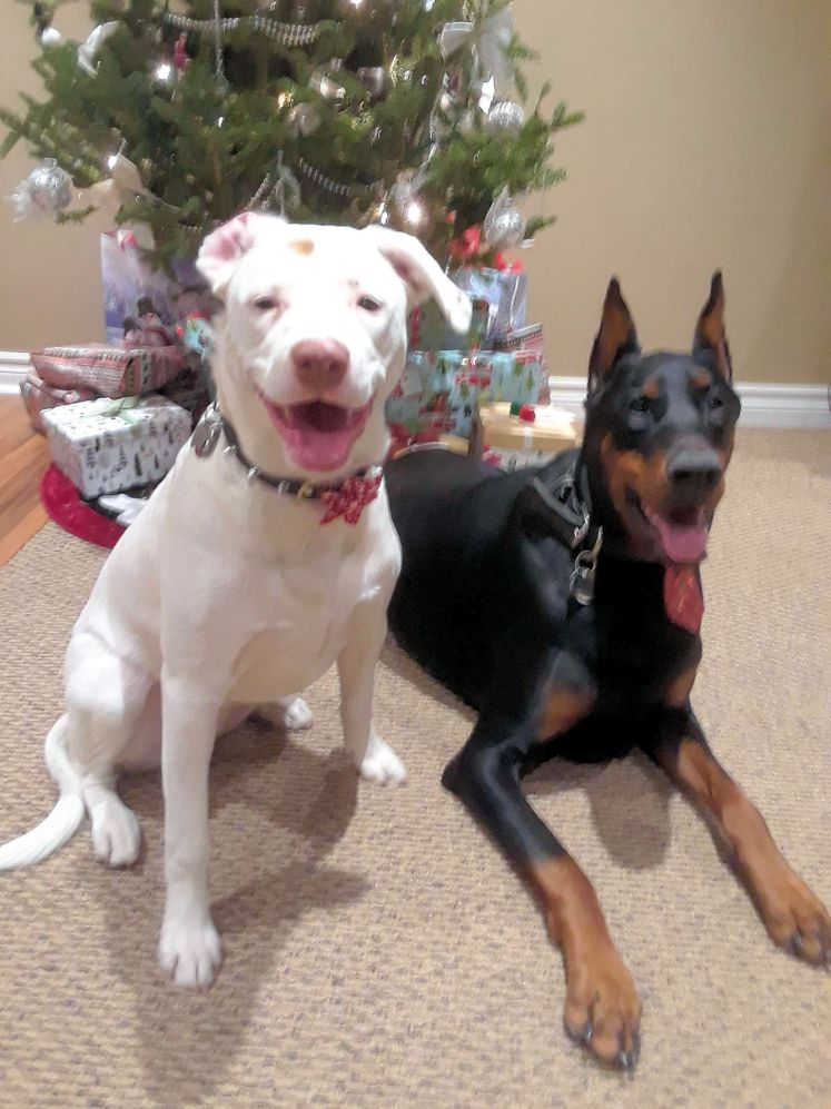 rom and Julis 1st christmas